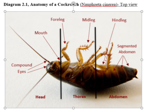 close up of a cockroach showing anatomy with labels