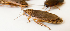 Close up of cockroaches on a white background