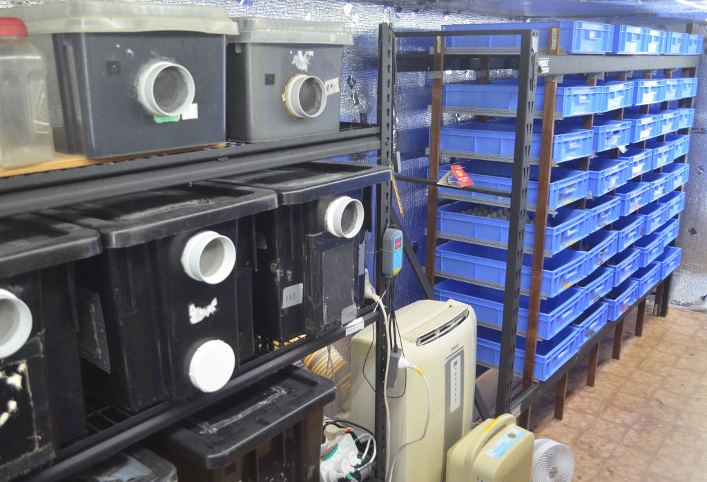 photo of a commercial insect farm with hundreds of blue mealworm trays and cricket containers. Crickets are housed in black containers and mealworms are housed in blue trays on shelving. Farm has climate control and reflective aluminium reflective insulation.