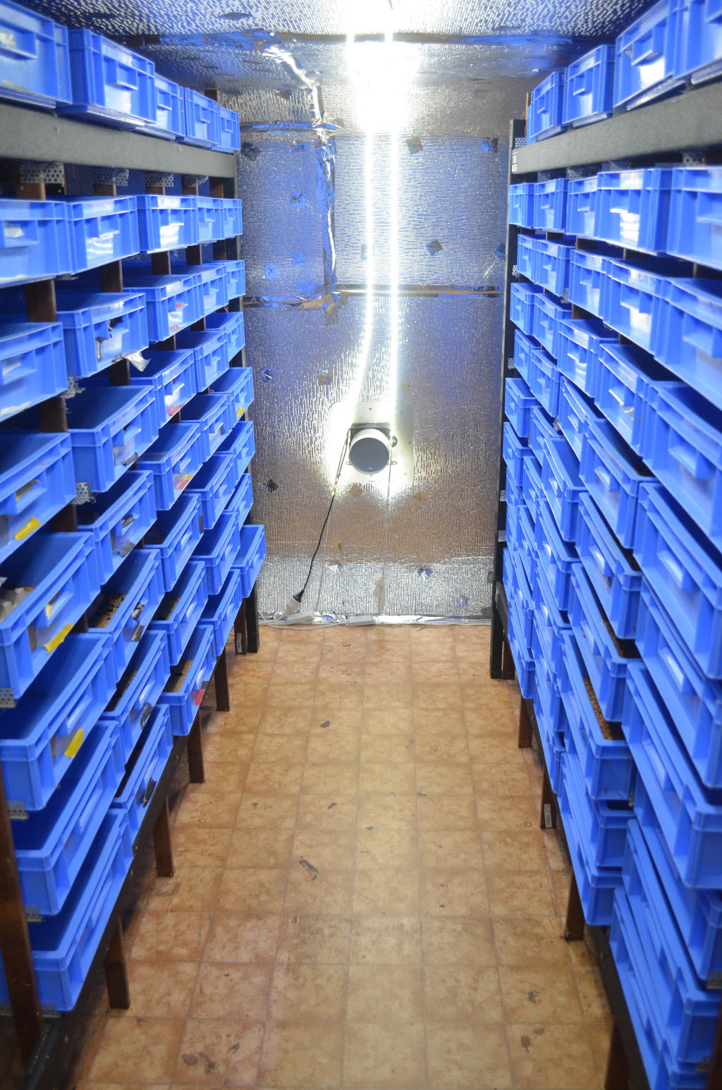 Photo of a commercial mealworm farm. A coridor in the middle with wall to wall containers on either side. Bright strip lightening on roof and ventilation fan at end wall. Walls are covered in aluminium insulation.