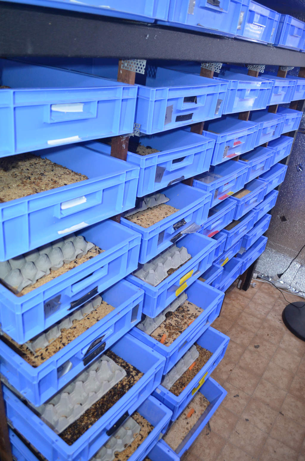 photo of a commercial mealworm farm with hundreds of blue trays in shelving. The front rows are pulled out so you can see the mealworms.
