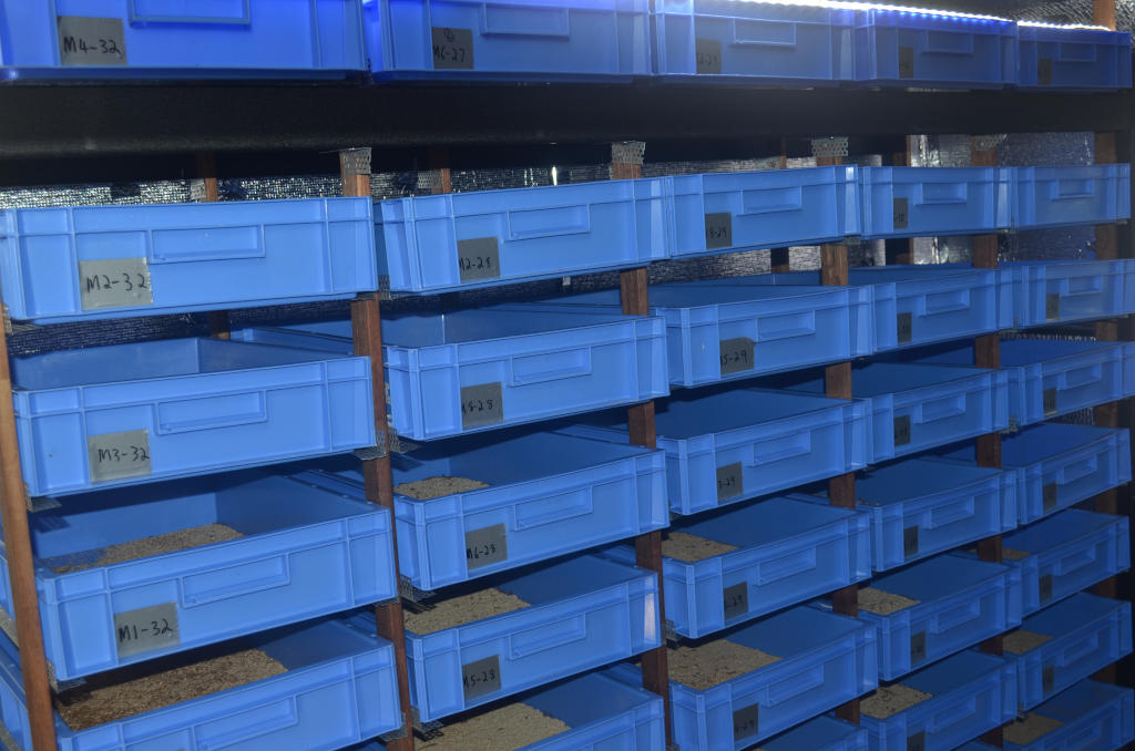 photo of commercial insect farm with numerous blue mealworm trays in rows