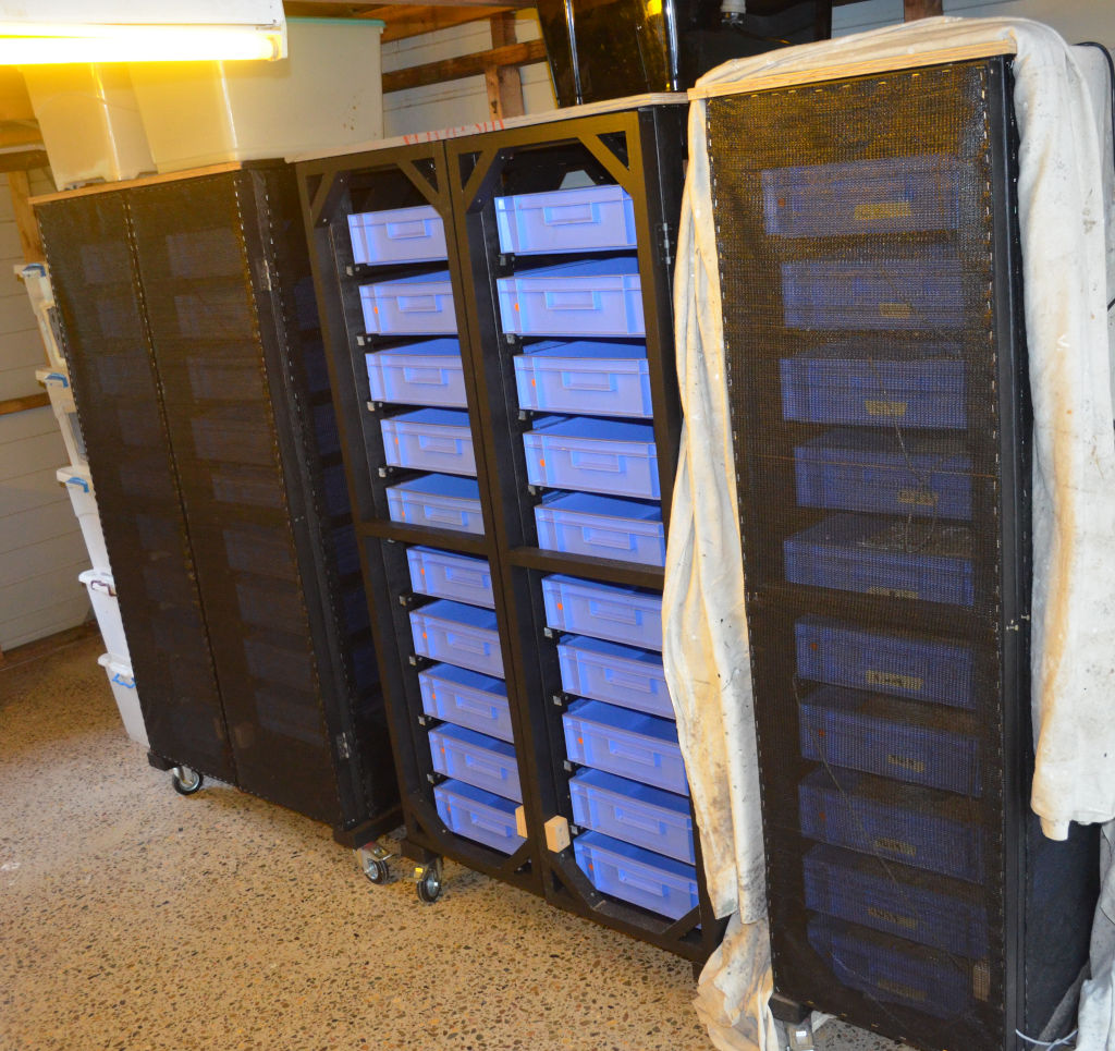 Photo of a commercial mealworm rack system that has black shade cloth on the frame to exclude moths. Rack system is made from black wood framing and has large blue trays.