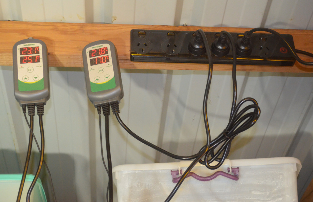Photo of two temperature controllers for an insect farm. They are attached to wood beams on the roof of a insect farm.