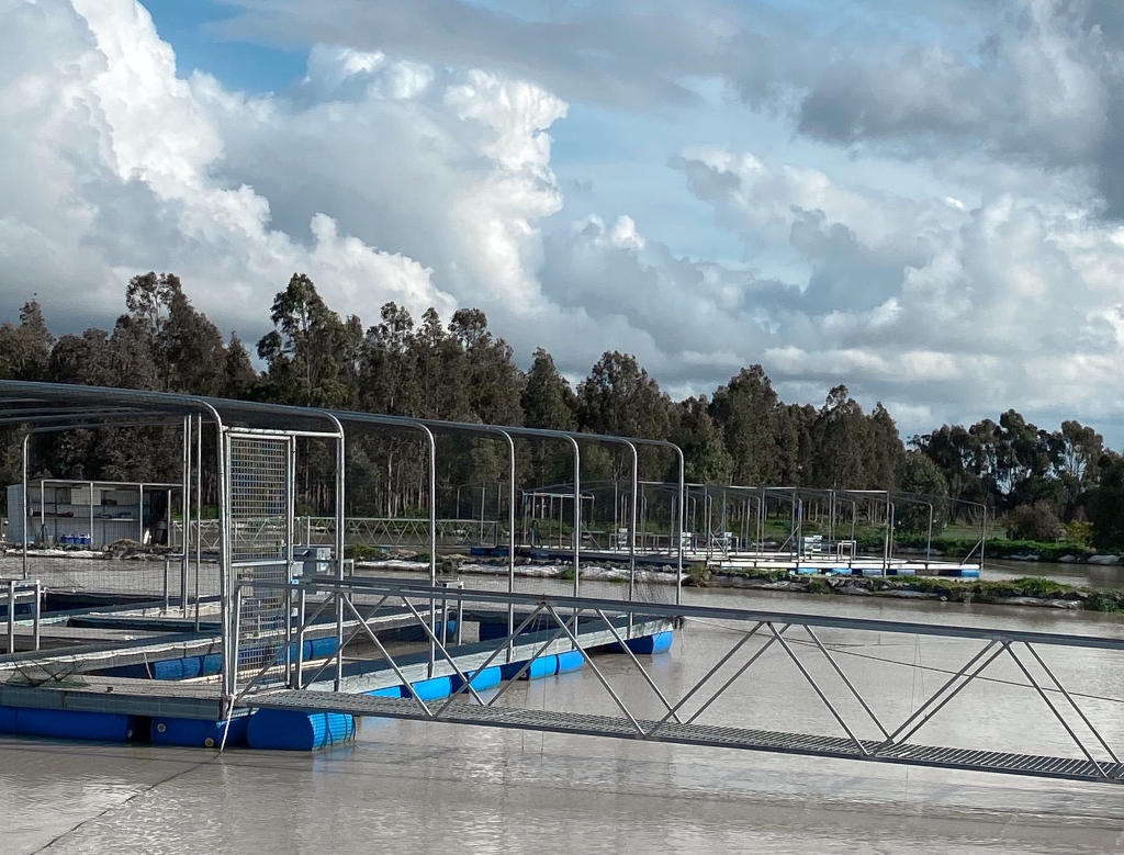 Photo of aquaculture pond with metal framing cages and boardwalk. Pond and cages in foreground, trees in background.