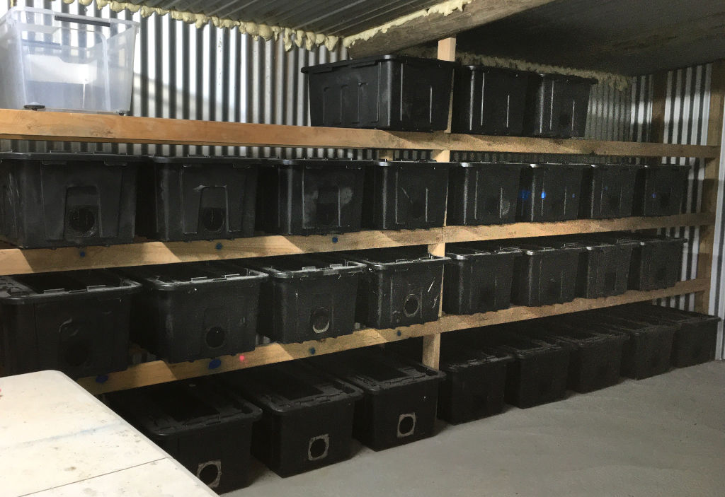 Photo of the inside of a commercial cricket farm. Contains numerous black containers stored in an insulated metal farm.