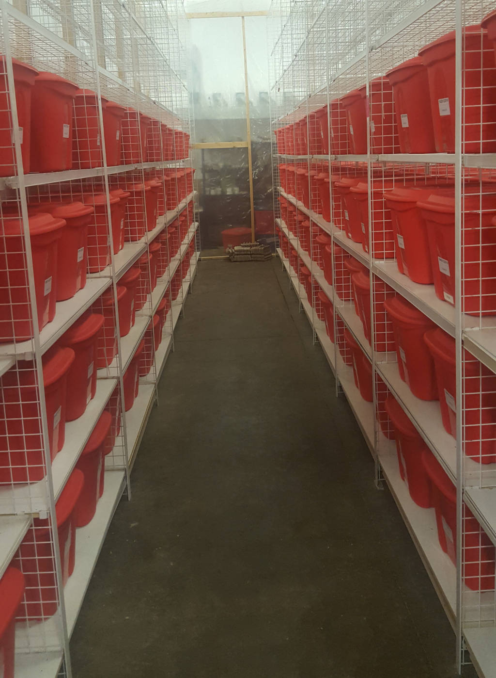 photo of a large cricket farm in a warehouse. Long isle in the center with hundreds of red cricket containers on shelves on both sides.